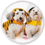 Cute Dogs In Halloween Costumes Round Beach Towel by Elena Elisseeva