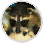 Cute Face Behind The Mask Baby Raccoon Round Beach Towel