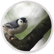 Cute Face Nuthatch Round Beach Towel