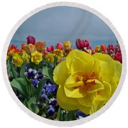 Daffodil Up Front Round Beach Towel