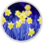 Daffodils Flowers Round Beach Towel