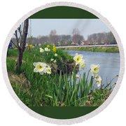 Daffodils In Holland 01 Round Beach Towel