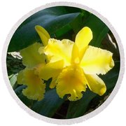 Daffodils In The Wild Round Beach Towel