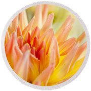 Dahlia Flower 06 Round Beach Towel