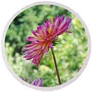 Dahlia Flower Art Print Green Summer Garden Round Beach Towel