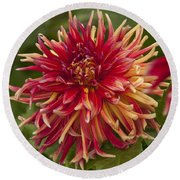 Dahlia In Its Prime Round Beach Towel