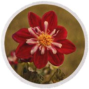 Dahlia Round Beach Towel by Sandy Keeton
