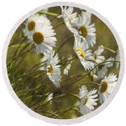 Daisies Blowin In The Wind Round Beach Towel