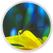 Daisy And Dragonfly Round Beach Towel