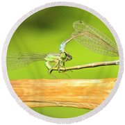 Damselflies Round Beach Towel