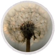 Dandelion In Backlight Round Beach Towel