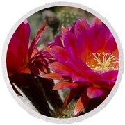 Dark Pink Cactus Flowers Round Beach Towel