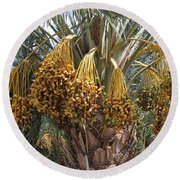 Date Palm In Fruit Round Beach Towel