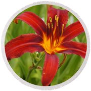 Day Lilly In Diffused Daylight Round Beach Towel