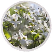 Dazzling Sunlit White Spring Dogwood Blossoms Round Beach Towel