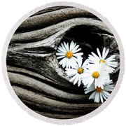 Dead Wood And Asters Round Beach Towel