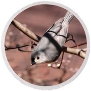 Decked Out - Tufted Titmouse Round Beach Towel