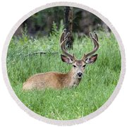 Deer At Rest Round Beach Towel