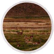 Deer In The Golden Meadow Round Beach Towel