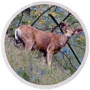 Deer Standing In Wildflowers Round Beach Towel