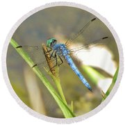 Delicate Dragonfly Round Beach Towel