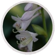 Delicate Lillies Round Beach Towel