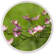 Delicate Pink Dogwood Blossoms Round Beach Towel