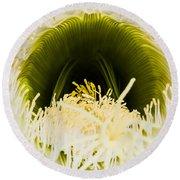 Depths Of The Cactus Flower Round Beach Towel