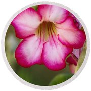 Desert Rose Round Beach Towel