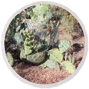 Desert's Collection Of Dried Flowers 3 Round Beach Towel