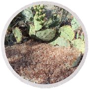 Desert's Collection Of Dried Flowers1 Round Beach Towel