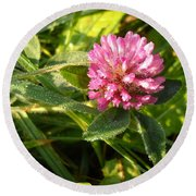 Dew Covered Clover Blossom Round Beach Towel