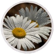 Dew Tell Oxeye Daisy Wildflowers Round Beach Towel
