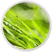 Dewy Green Grass  Round Beach Towel