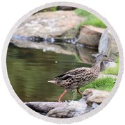 Diary Of A Mad Brown Duck Round Beach Towel