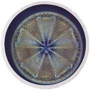 Diatom - Actinoptychus Heliopelta Round Beach Towel