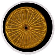 Diatom Alga, Arachnoidiscus Round Beach Towel