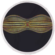 Diatom - Diploneis Crabro Round Beach Towel