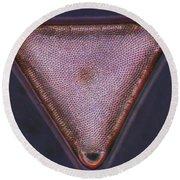 Diatom - Triceratium Formosum Round Beach Towel