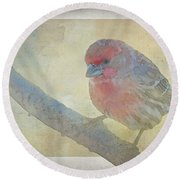 Digitally Painted Finch With Texture II Round Beach Towel