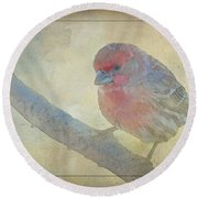 Digitally Painted Finch With Texture IIi Round Beach Towel