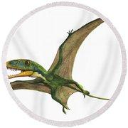 Dimorphodon Macronyx, A Prehistoric Era Round Beach Towel