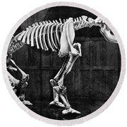 Diprotodon, Cenozoic Mammal Round Beach Towel