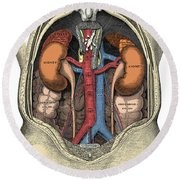 Dissection Of The Abdomen Round Beach Towel