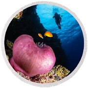Diver And Magnificent Anemone, Fiji Round Beach Towel