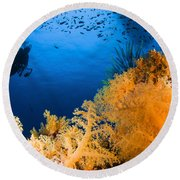 Diver Hovering Over Soft Coral Reef Round Beach Towel