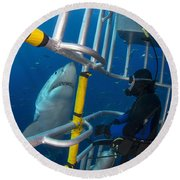 Diver Observes A Male Great White Shark Round Beach Towel