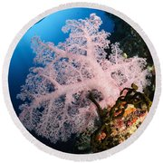 Diver Over Soft Coral Seascape Round Beach Towel