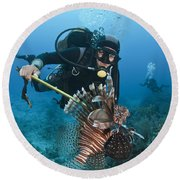 Diver Spears An Invasive Indo-pacific Round Beach Towel
