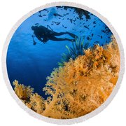 Diver Swimms Above Soft Coral, Fiji Round Beach Towel